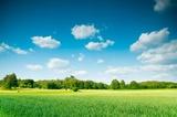 letni krajobraz