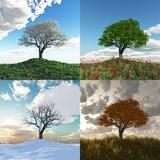 samotne drzewo w czterech porach roku upływ czasu