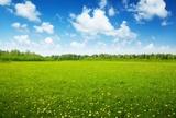 pole wiosennych kwiatów i doskonałe niebo