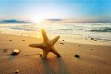 Rozgwiazda na plaży