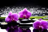 Zdroju wciąż życie z setem różowa orchidea i kamienia odbicie