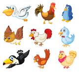Zbiór ptaków