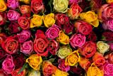 Kwiaty. Kolorowe róże tło