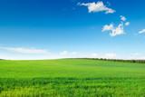 malownicze zielone pole