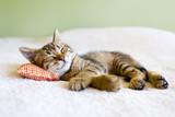 Mała koteczka