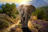 Słonia odprowadzenie na drodze przy zmierzchem