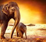 Słoń matka i dziecko outdoors