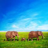 Słonie rodziny na sawannie. Safari w Amboseli, Kenia, Afryka