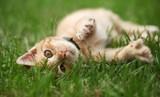 Mały kot bawić się w trawie