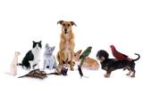 Zwierzęta - pies, kot, mysz ...