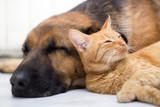 kot i pies śpią razem