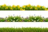 freisteller kwiaty łąki trawnik