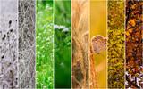 Kolaż w czterech sezonach: zima, wiosna, lato, jesień.