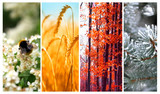 Cztery pory roku: wiosna, lato, jesień i zima