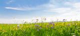 Pole kwiatów na wiosnę