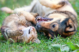Pies i kot grać razem odkryty. Leżąc na plecach razem.