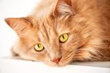 Smutny kot cię obserwuje