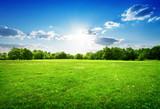Zielona trawa i drzewa