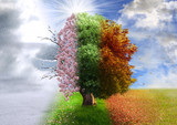 Cztery pory roku, manipulacja zdjęciami, magiczne, natura