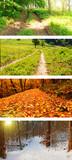 Cztery pory roku dzikie drogi