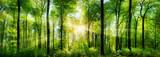 Panorama lasów z promieniami słońca