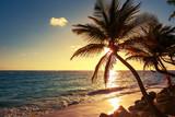 Dłoń drzewo na tropikalnej plaży