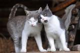 Dwa słodkie koty