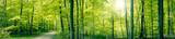 Panorama zielony las krajobraz
