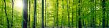 Krajobraz panorama las bukowy