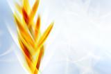 Nowoczesne Pomarańczowe Streszczenie Fal Na Niebieskim Tle