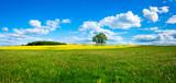 Piękny letni krajobraz