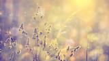Retro zamazana gazon trawa przy zmierzchem z racą. Vintage fioletowy czerwony i żółty kolor pomarańczowy efekt filtra używane. Używane selektywne fokusowanie.