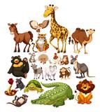 Różne rodzaje dzikich zwierząt