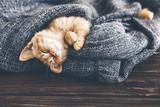 Śpiący kotek Gigner