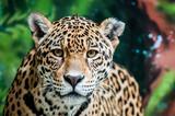 Dręczenie Jaguara