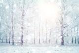 białe drewno pokryte mroźnym, mroźnym krajobrazem