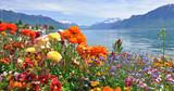 Wiosenne kwiaty w rozkwicie