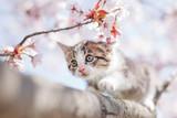 Kocięta i kwiaty wiśni