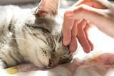 kobieta dłoń pieszczoty głowy kota, uwielbiam zwierzęta