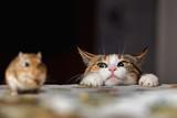Kot grający z małą myszką typu gerbil na stole