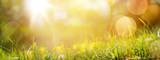tło wiosna streszczenie lub lato tło ze świeżych g