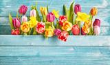 Granica tulipan z miejsca kopiowania