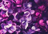 Tło kwiaty bzu