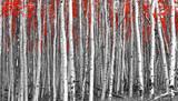 Czerwone liście w lesie czarno-biały krajobraz