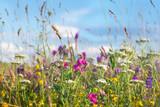 Dzikich kwiatów łąka z niebem w tle