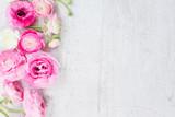 Różowi i biali ranunculus kwiaty