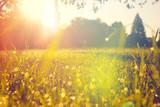 Łąka w świetle poranka z odrobiną rosy na trawie