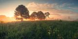 Kolorowy wiosna wschód słońca na łące