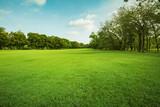 zielone pole trawy w parku publicznym