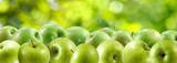 obraz zielone jabłka z bliska